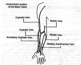 anatomy, Cephalic Vein